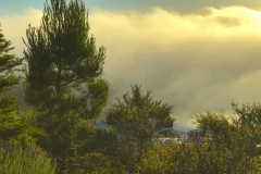 Morning Fog in Atascadero